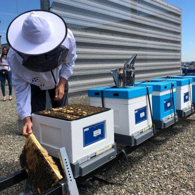 pasieka pszczoly ekologia csr